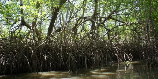 Etranges les racines de ces arbres …