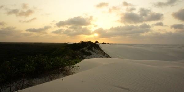 La rencontre de la forêt et des dunes