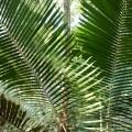 Forêt Sabana