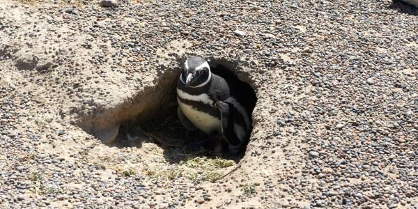 Mamita Pinguina et son Pinguinito