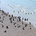 Les vacances des manchots à la plage