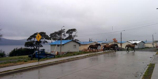 Les chevaux vivent librement ici