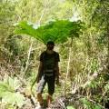 La végétation le long du Rio Simpson