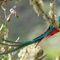 14. Quetzal