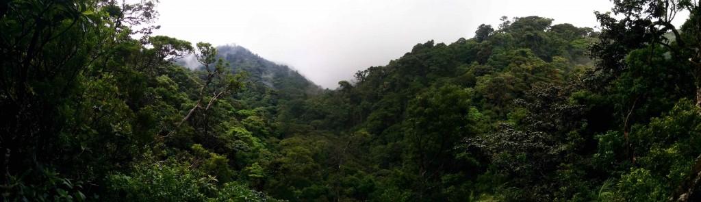 Vue panoramique de la forêt de nuage