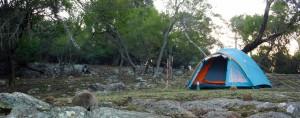 Wombat & kangourou autour de la tente