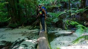 Un arbre sur une rivière = Manu dessus