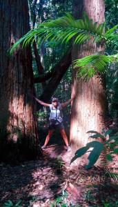 Des graaaaands arbres