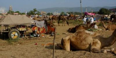 Campement de nomade