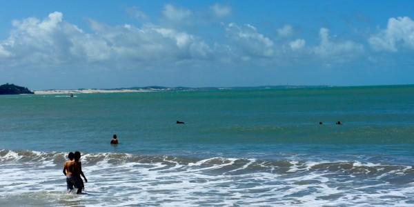 Les dauphins qui nagent près des baigneurs