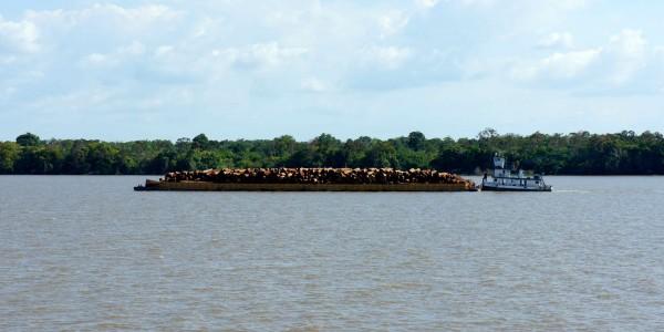Des petits bateaux traînent des grandes plateformes