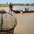 Les pêcheurs à l'oeuvre