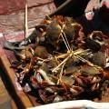 Les crabes qu'attrapent les pêcheurs sur le delta