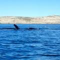 Calins entre mamita et baleinito