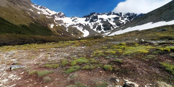 Végétation sur le chemin du Glacier