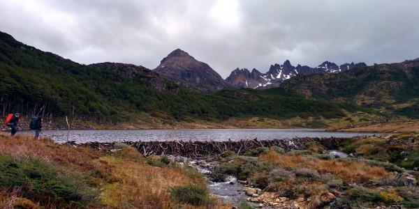 Les barrages de castor créent des lacs entiers