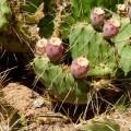 Wanted : mais on pensait voir bien plus de cactus !