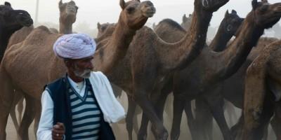 Le départ d'un troupeau